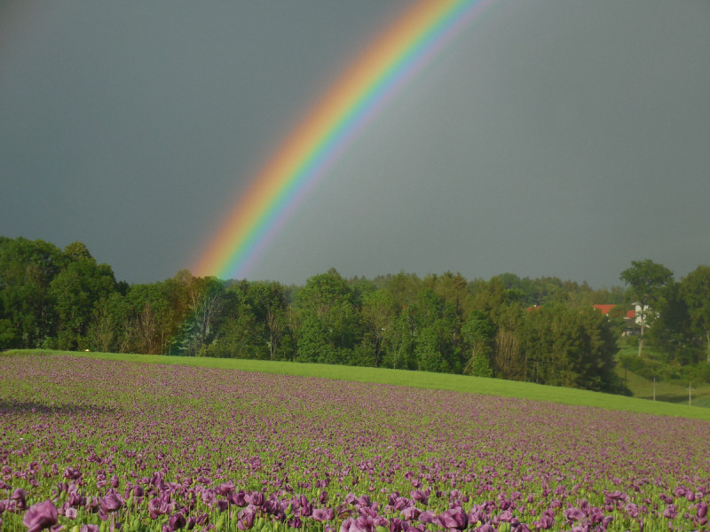 Singlebrse in Gmunden und Singletreff: Seitensprung
